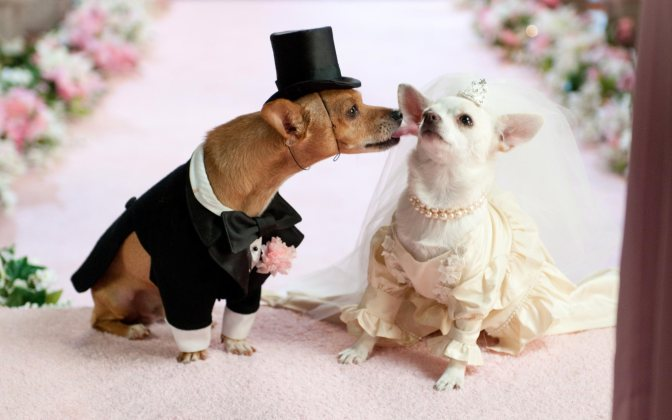 dogs wedding